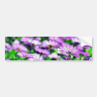 Daisy Daisies Flowers Purple Bumper Sticker
