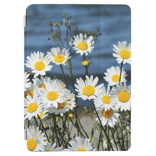 Daisy-Daisy, pretty white and yellow daisies iPad Air Cover