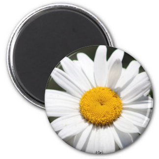 Daisy Darling 2 Inch Round Magnet