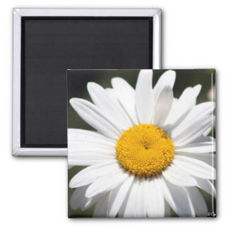 Daisy Darling 2 Inch Square Magnet