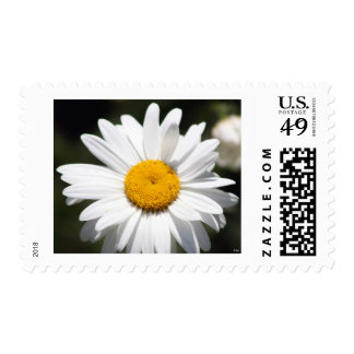 Daisy Darling Postage Stamps