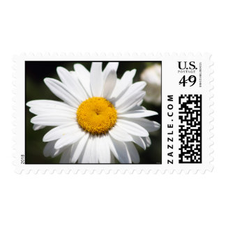 Daisy Darling Postage Stamp