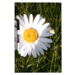 Daisy Day Dry Erase Whiteboard