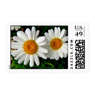 Daisy Days stamps