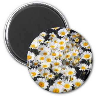 Daisy Delight 2 Inch Round Magnet