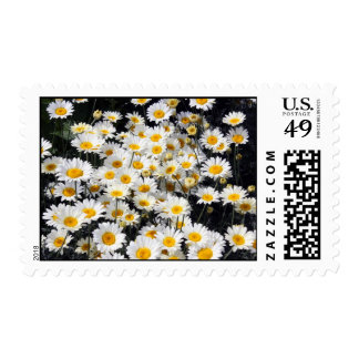 Daisy Delight Postage Stamps