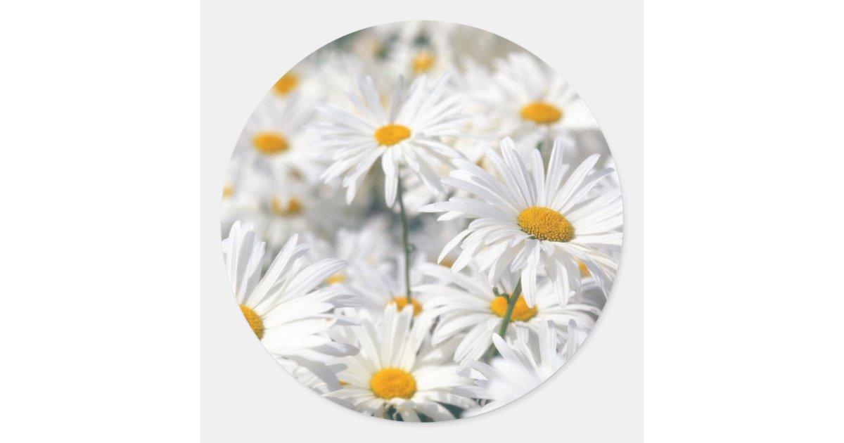 Daisy Design Classic Round Sticker