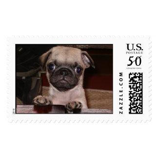 Daisy Dog Postage