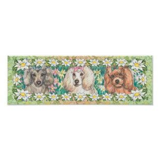 Daisy Dogs Toy Poodles Poster Print