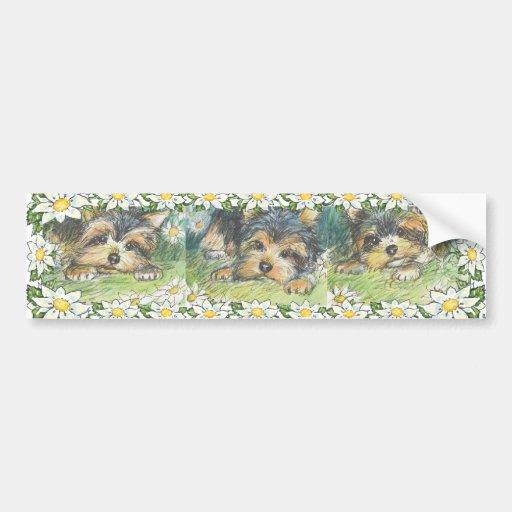 Daisy Dogs Yorkie Puppies Bumper Sticker Car Bumper Sticker