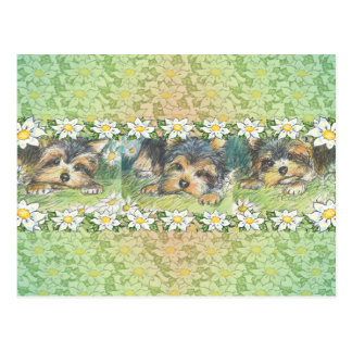 Daisy Dogs Yorkie Puppies Postcard