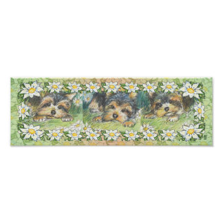 Daisy Dogs Yorkie Puppies Poster Print