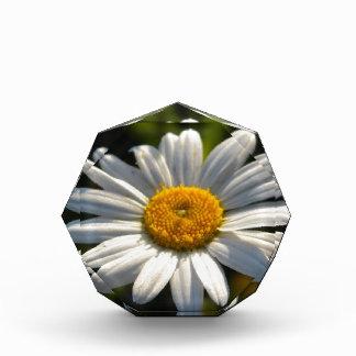 Daisy Face Green Acrylic Award