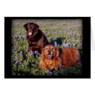 Daisy & Farley Notecard