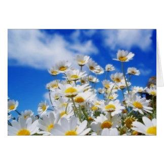 Daisy Field Card