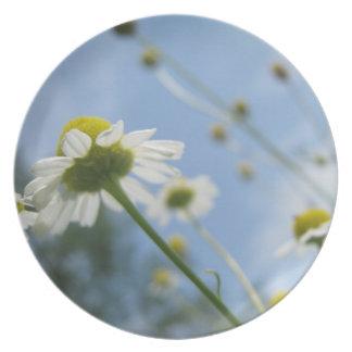 Daisy Field Plate