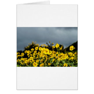 Daisy Fields Card