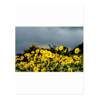 Daisy Fields Postcard