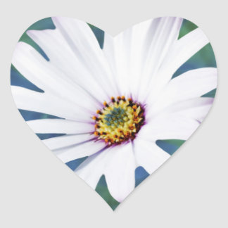 Daisy Flower and meaning Heart Sticker