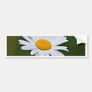 Daisy flower bumper sticker