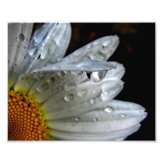Daisy Flower Macro Art Photo