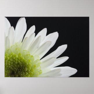 Daisy Flower on Black Poster