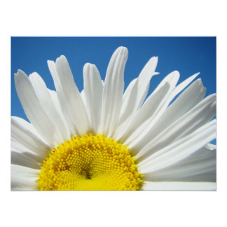 Daisy Flower poster Blue Sky Floral Holidays