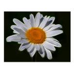 Daisy flower power postcard