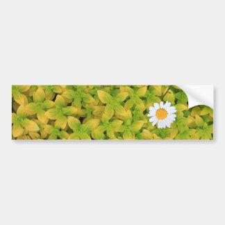 Daisy Flower Reaching For The Sun Bumper Sticker