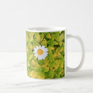 Daisy Flower Reaching For The Sun Coffee Mug