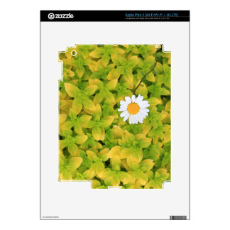 Daisy Flower Reaching For The Sun Decal For iPad 3