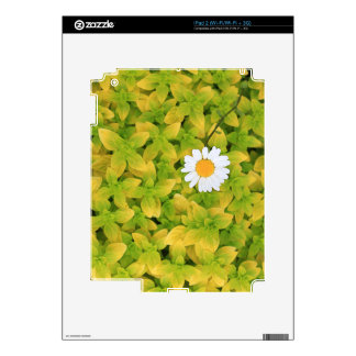 Daisy Flower Reaching For The Sun iPad 2 Decals