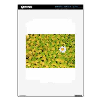 Daisy Flower Reaching For The Sun iPad 3 Skins