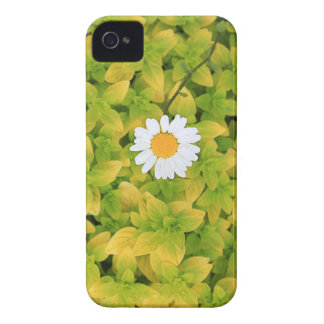 Daisy Flower Reaching For The Sun iPhone 4 Cover