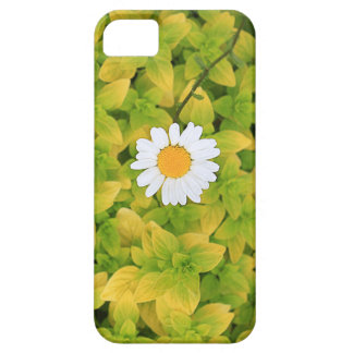 Daisy Flower Reaching For The Sun iPhone SE/5/5s Case