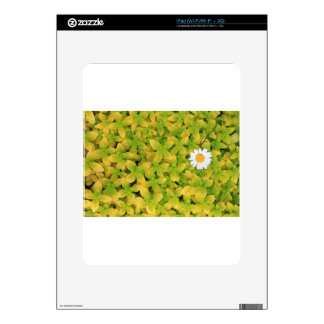 Daisy Flower Reaching For The Sun Skins For The iPad
