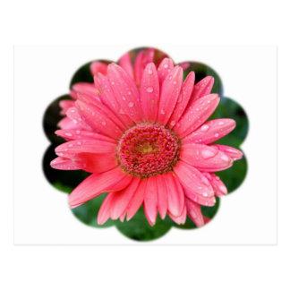 Daisy Flower Shape Postcard