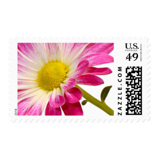 Daisy Flower Stamps | Fuchsia Daisy Postage