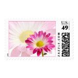 Daisy Flower Stamps | Fuschia Daisy