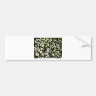 Daisy flower white wild flowers car bumper sticker