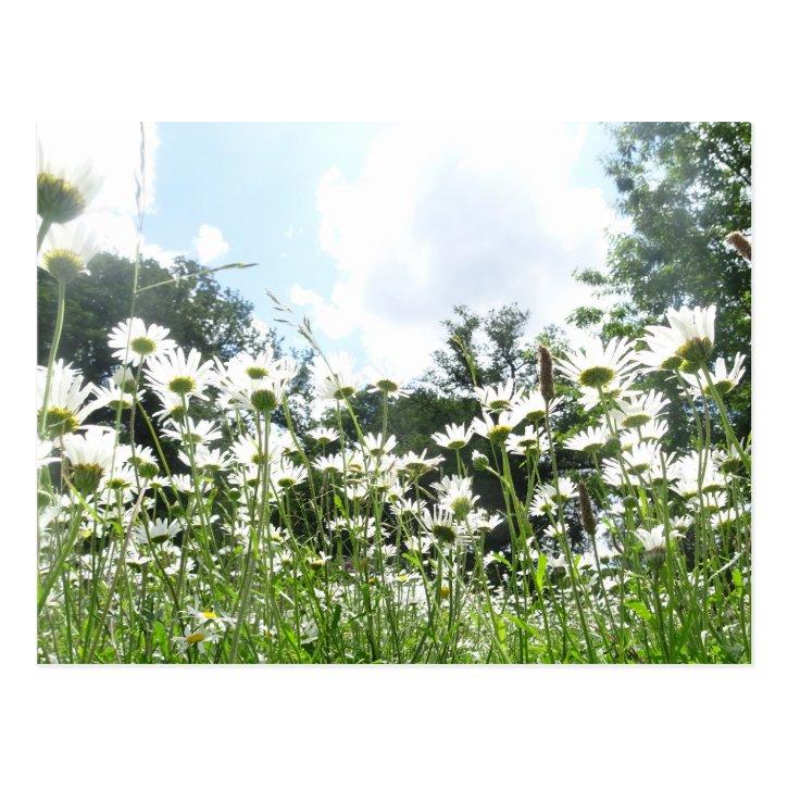 Daisy Flowers DIY Postcard