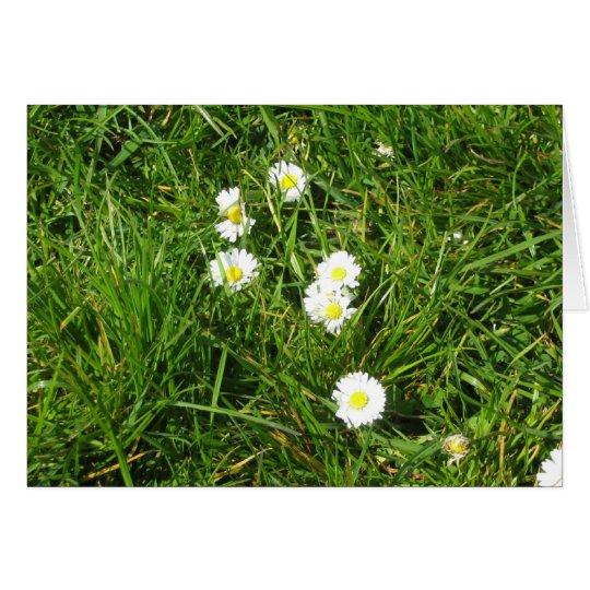 Daisy fresh card