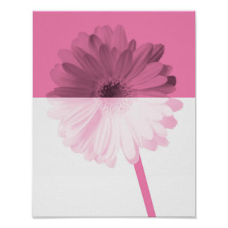 Daisy halves in pink poster