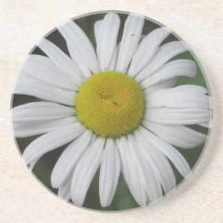 Daisy Heaven Coaster