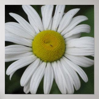 Daisy Heaven (Framed) Poster