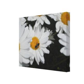 Daisy Honey Bee Canvas Print