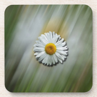 Daisy in a Hurry Beverage Coaster