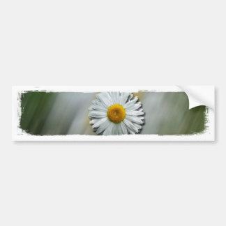Daisy in a Hurry Bumper Sticker