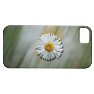 Daisy in a Hurry iPhone SE/5/5s Case