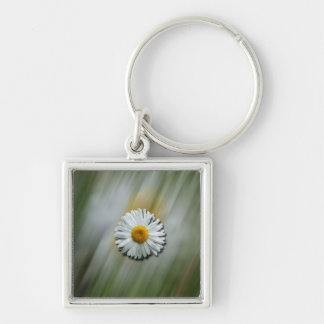 Daisy in a Hurry Keychain